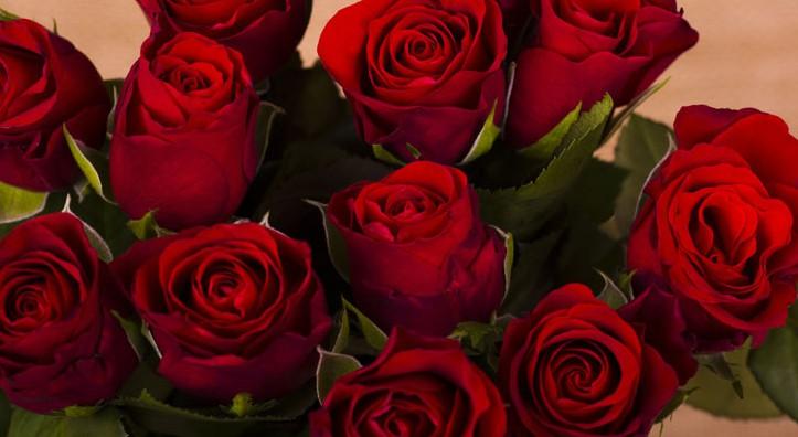 redroses2-e1458933785978_265468