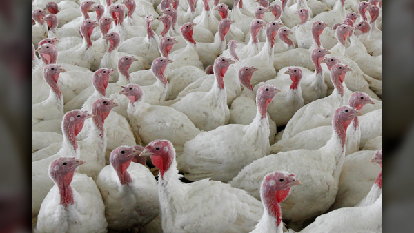 turkey_1542720783749.jpg