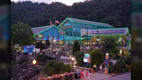 Ripley's-Aquarium_1554217039678.jpg