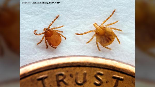 Asian-Longhorned-Tick-1_1558732971455.jpg
