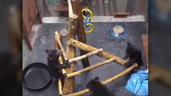 three-bears-3_1556915752071.JPG