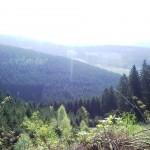 Wandelen door een woud van tuinkers