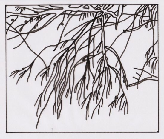 Branches and Leaves at Redcliffe Beach Drawing - adult art classes