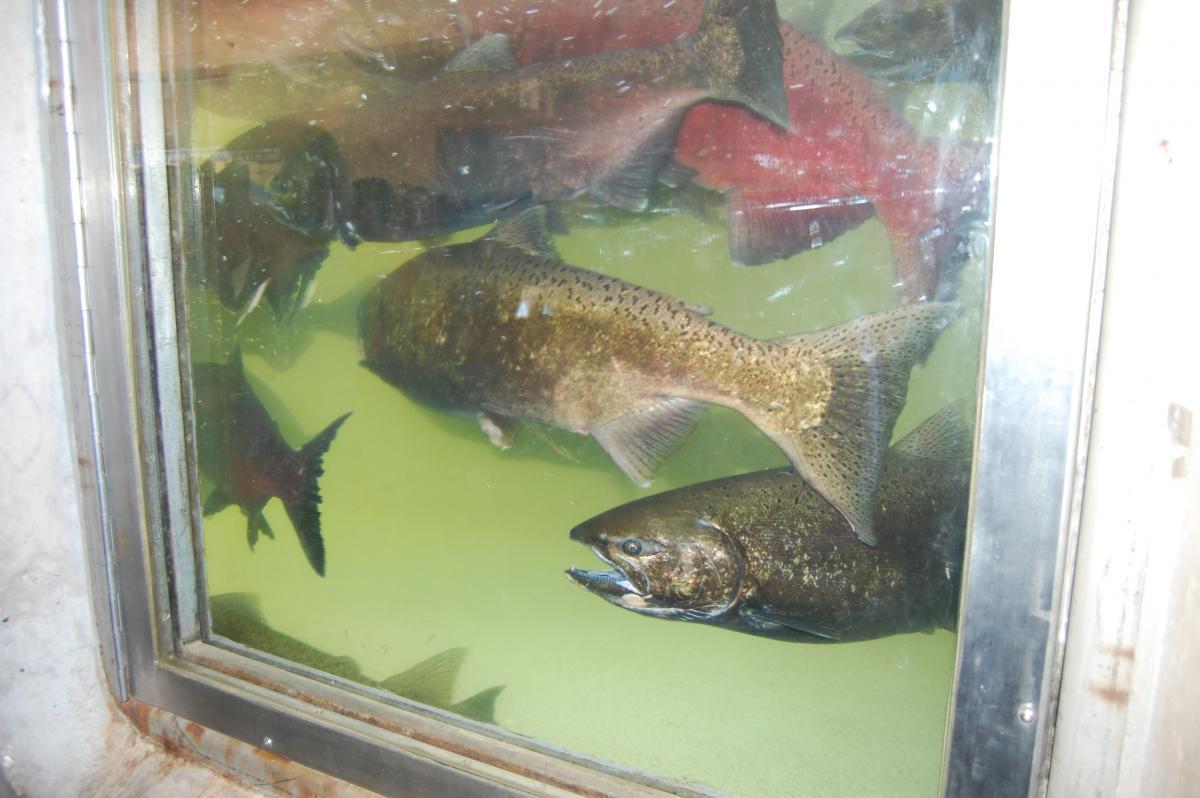 Fish Shop Thunder Bay