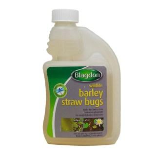 Barley Straw Bugs