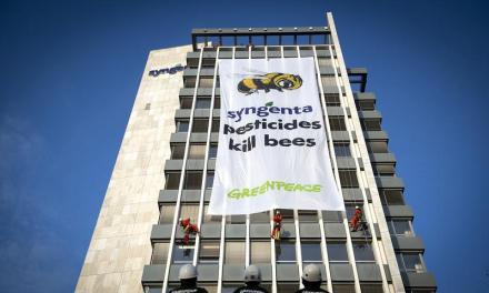 I pesticidi Syngenta uccidono le api
