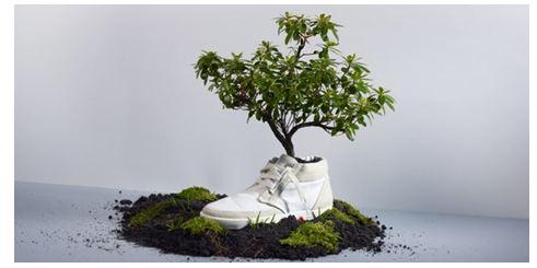 OATshoes, la scarpa green che germoglia