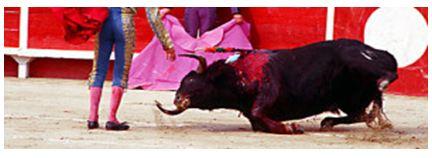 Ultimatum alla corrida: pensieri di un toro
