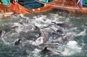 Mattanza dei delfini