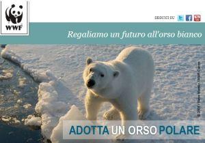 Adotta un orso bianco