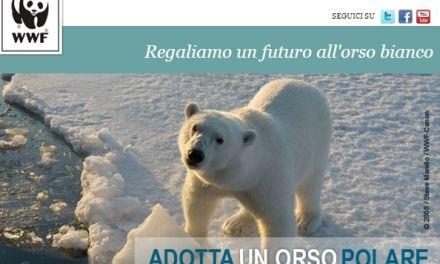 Adotta un orso polare