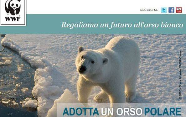 """Gli orsi polari stanno sparendo ? Dipende da dove si guarda. Perchè ci sono zone dell'Alaska dove orsi """"ibridi"""" stanno rivelando inaspettate doti di resistenza. Almeno per ora"""