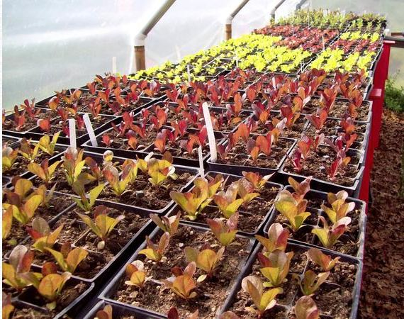 Il sharing garden: un modo per produrre cibo senza denaro