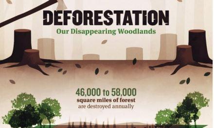 Stop alla deforestazione. Un'infografica