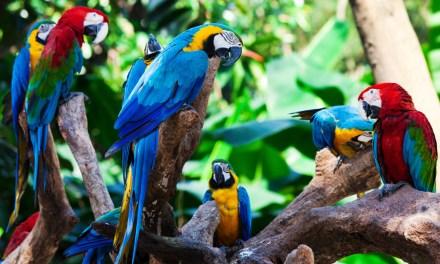 Proteggere la biodiversità: Intervista a Fabrizio Destro di Legambiente