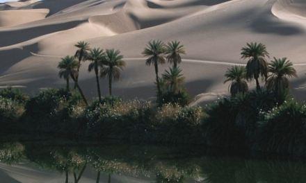 La scomparsa delle oasi