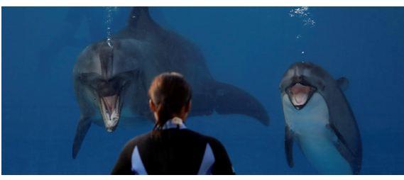 Anche i delfini ( morti) hanno diritto alla privacy. Incredbile ma vero: accade negli Usa, in New Jersey
