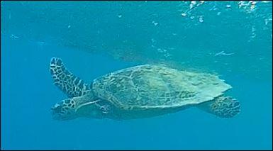 Dal nostro inviato nell'Eden terrestre: le Maldive