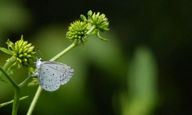 La Torbiera di Agrate: il parco al servizio della natura