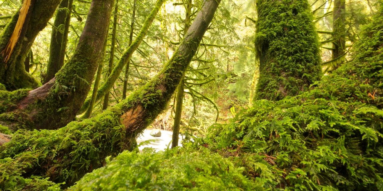 FORESTE E ALBERI: BENEFICIO PER LE GENERAZIONI PRESENTI E FUTURE