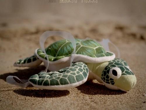 Amore tossico d'una tartaruga e una lattina