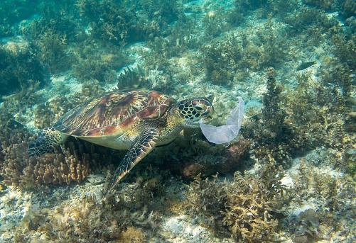 L'amore tossico tra una tartaruga e un reggilattine. Raccontato da Lorenzo Baglioni e Mario Tozzi