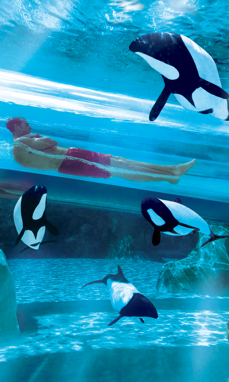 Aquatica Orlando Coupons Pictures Prices Discounts