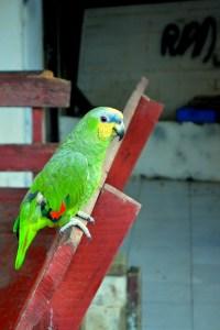 Johan & margaretha vogel