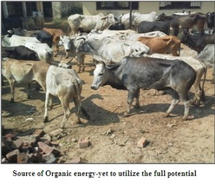 organic energy sources
