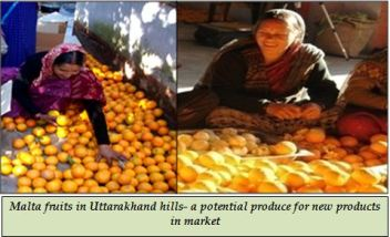 Malta fruits in Uttarakhand hills- a potential produce for new products in market