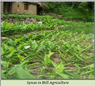 Spices in Hill Agriculture