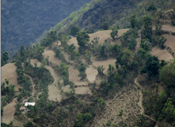 Bird eye view of Terrace farming in hilly tracts