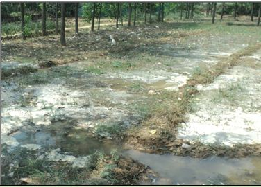 Earthen irrigation channel causing much of seepage losses