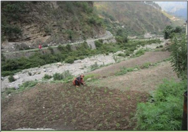 A woman farmer working in a small land holding in village watershed
