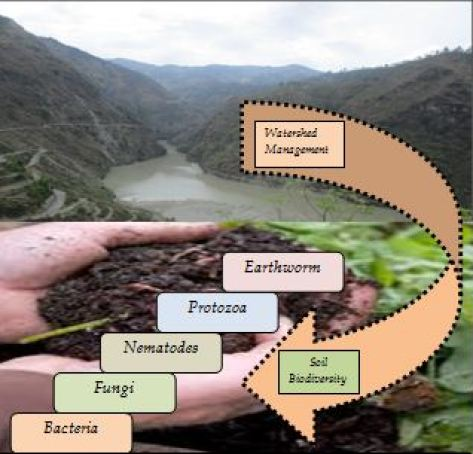 Watershed management and soil biodiversity