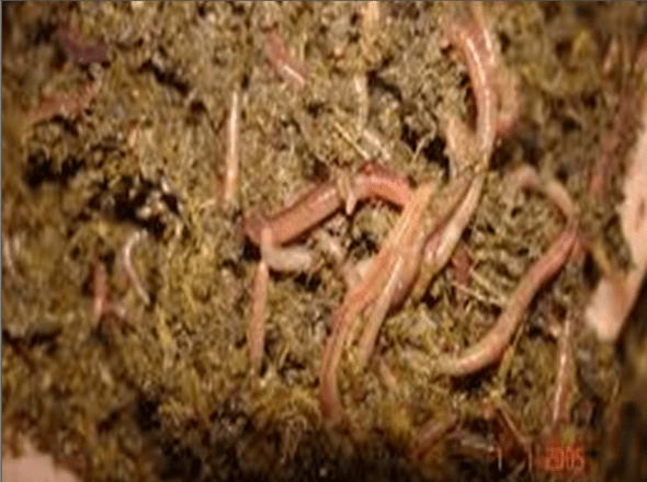 Earthworm enriches the soil biodiversity