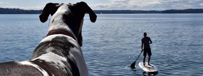 Paddeln mit Hund