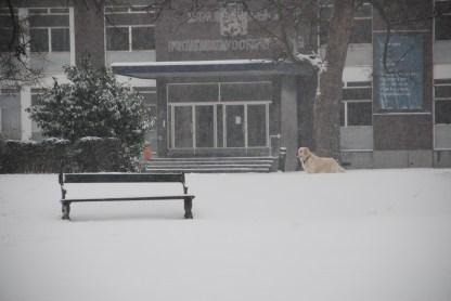 sneeuw-014
