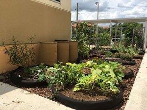 Water Wise Landscape Solutions, Beachside Montessori School teaching garden in Hollywood Florida