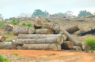 trees were destroyed in Cambodia