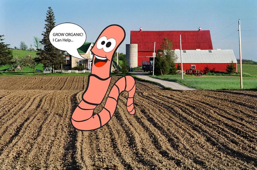 earthworm, earthworms organic soil amendments worm castings in watsonville