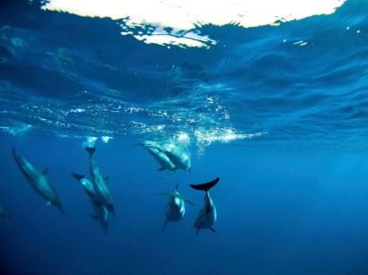 Delfine, Meeresschildkröten und Grindwale