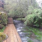 Ribeiras do Sarela: El bosque encantado