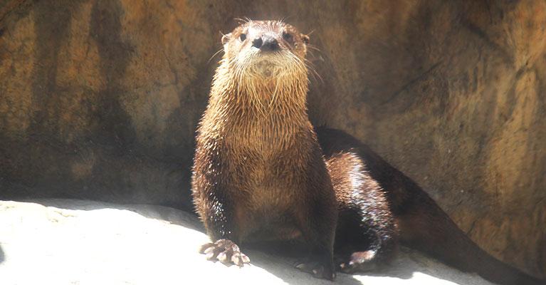 inset-female-otter-ella_1523538203122.jpg