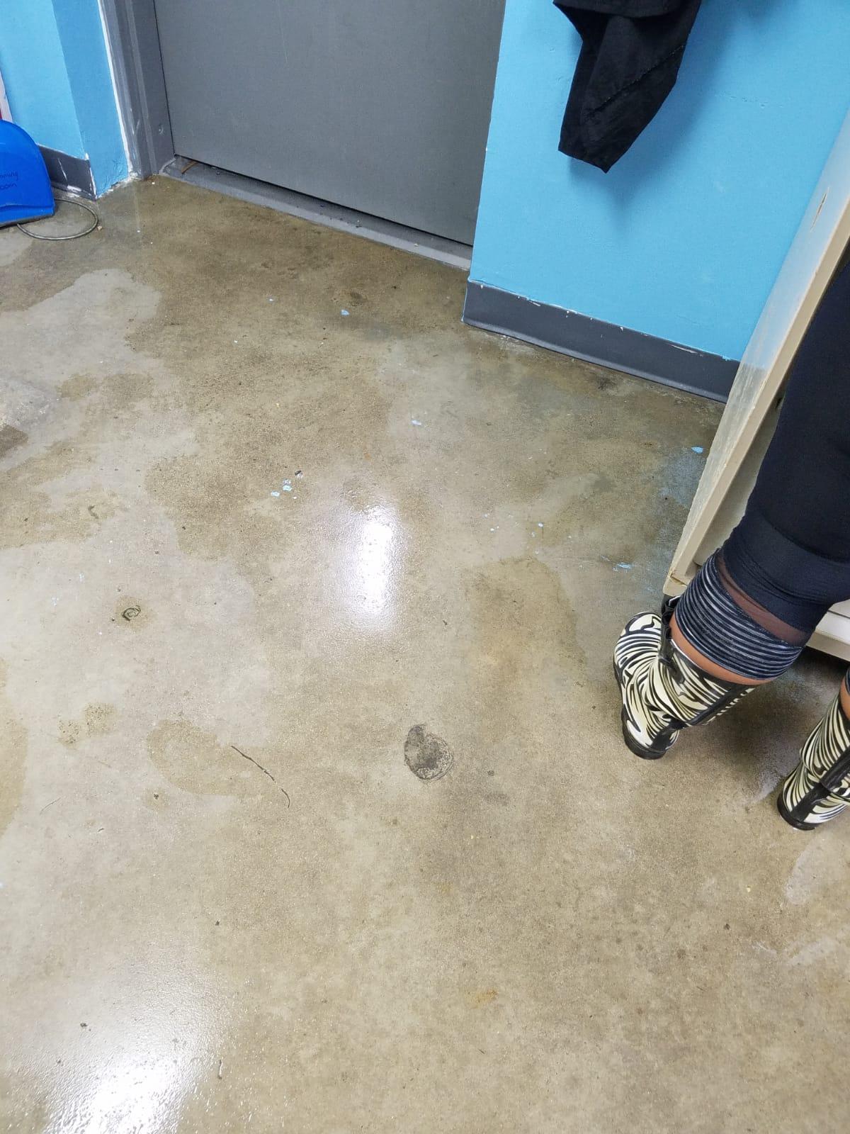 Outer Banks SPCA Flooding_1532540804581.jpg