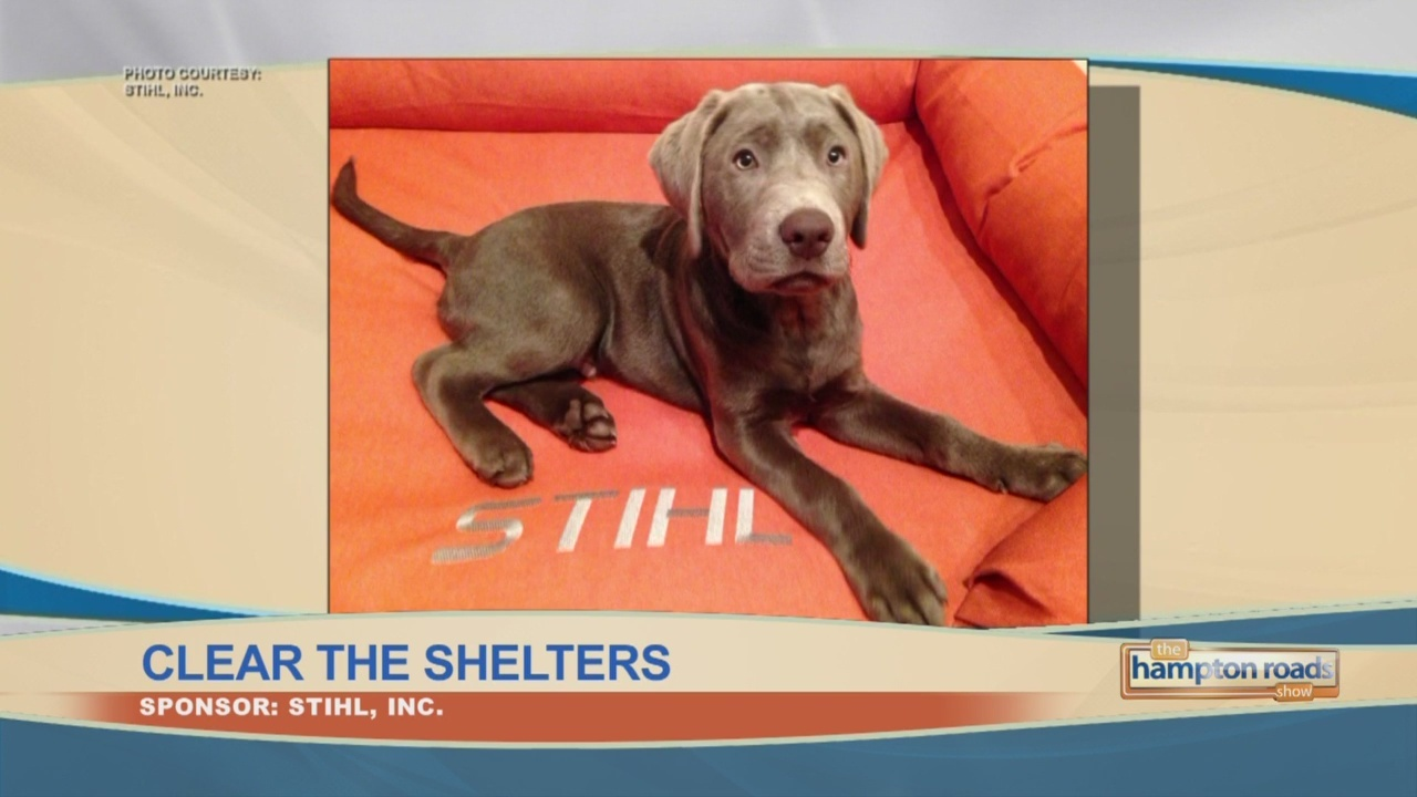 Stihl_Clears_the_Shelters_0_20180817151106