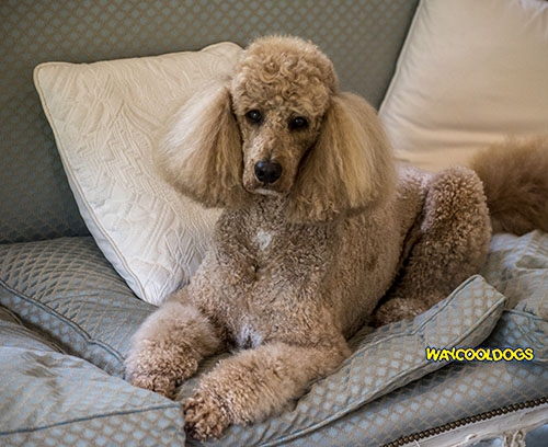 It Is Important To Think Seriously About What You Want In A Pet As Dog Breeds Not Only Differ Personality But They And Need