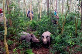 elephant-safari-1100x820