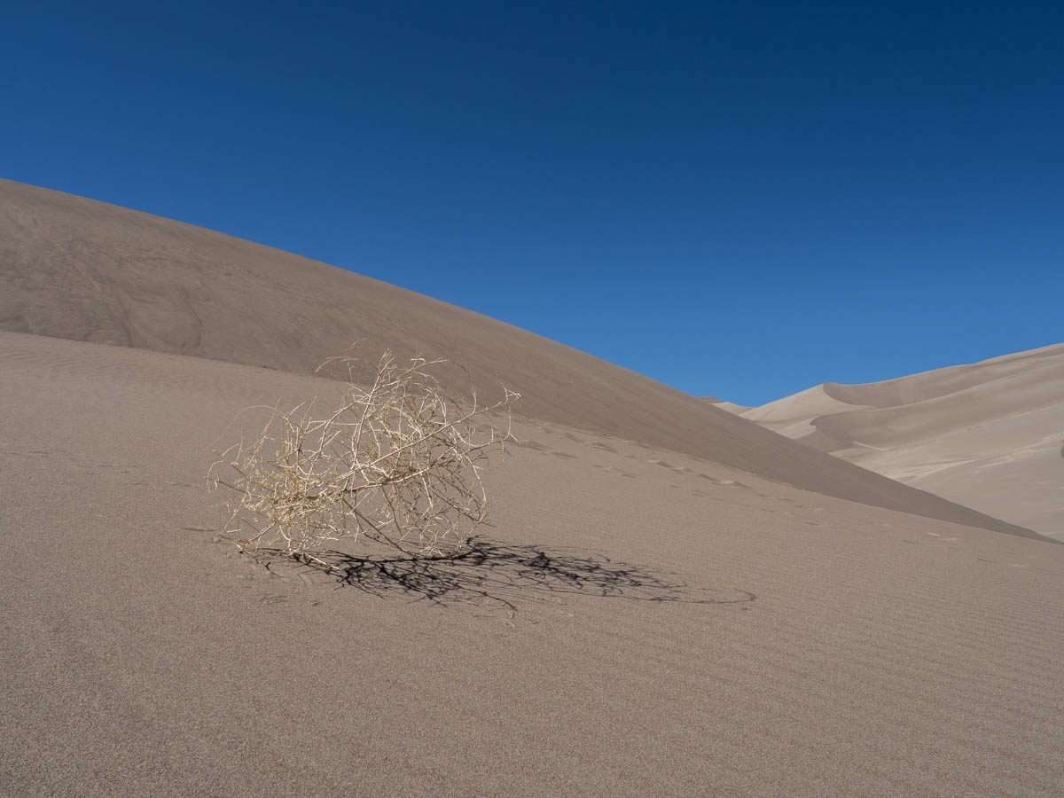 Sand Dunes in Colorado- tumbleweed