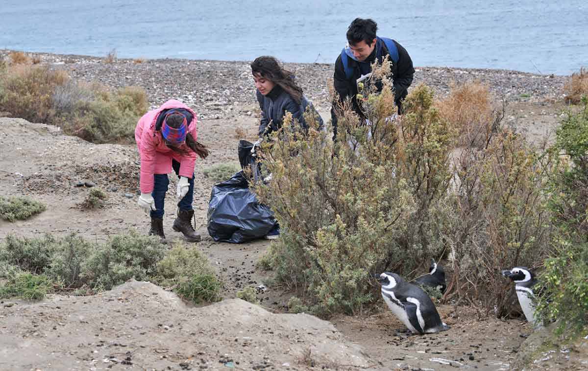 El Pedral Litter Clean Up Magellanic Penguin